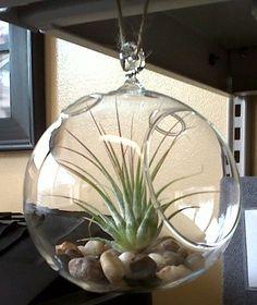 Glass Hanging Plant Terrarium! Cute!!!
