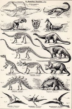 Vintage French Chart Dinosaurs Zoology Black and White by sandmarg: