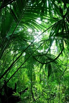 Jungle / rainforest.
