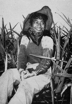 Pineapple fields of Lanai, 1967.