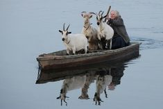 goats in boats...