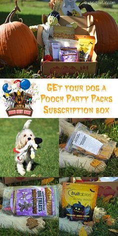 My GBGV Life I'm loving my @poochpartypacks #subscription box for Halloween this month!
