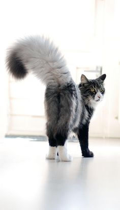 Plume or tail? Beautiful!