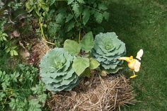 GLOBAL GROCERIES | Straw bale garden diary, May to October