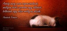 Anatole France idézet az állatok szeretetéről. Anatole France, Trance, Quotes, Movie Posters, Google, Vans, Animal, Crafts, Quotations