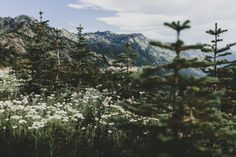 "thrilled-d: ""brianstowell: "" Mount Rainier National Park, Washington instagram - flickr - lost lust supply "" """