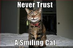 cat pics with funny captions | Funny photos of cats, cute cats pictures, funny cat caption pictures ...