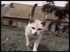 Video Gatti Divertenti... Risate Assicurate