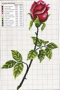 haft krzyżykowy / kwiaty / róże