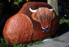 highlander cow, painted rock
