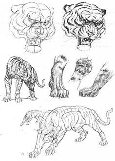Ken Hultgren the Art Of Animal Drawing Book Fresh the Art Of Animal Drawing by Ken Hultgren Big Cats Art, Furry Art, Cat Art, Tiger Sketch, Cat Sketch, Pencil Drawings Of Animals, Animal Sketches, Drawing Animals, Cat Drawing