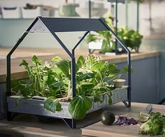 Imagine you could grow lettuce and herbs inside your house all year round? Well, you absolutely can, thanks to the new indoor hydroponic garden system from Ikea. This will allow anyone to easily grow fresh produce at home, without the use of soil and without any previous gardening experience. How Does It Work? This garden […]