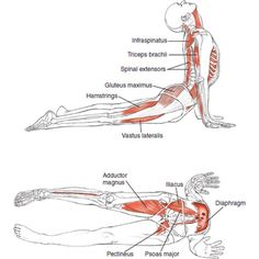 Urdhva Mukha Svanasana Upward-Facing Dog Pose B E N E F I T S — Improves posture — Strengthens the spine, arms, wrists — Stretches chest…
