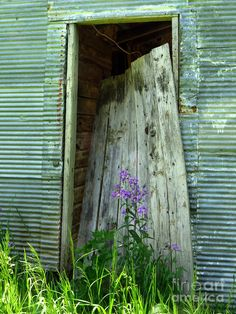 Found an old farm building with this weathered door just leaning in the doorway with a shock of purple Dames Rocket and green grass. Description from fineartamerica.com. I searched for this on bing.com/images