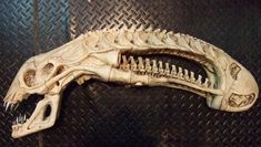 Alien Skull replica. Very cool if you are a fan of the movies!