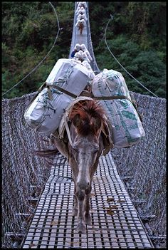 Beasts Of Burden ~The horses and donkeys don't like to cross these swing bridges in Nepal, but their owners chase them on and there is no turning back ~ Jomsom Trek Nepal Photo / By Peter and Yvonne ~ Foto Ghasa - Tatopani©