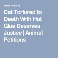 Cat Tortured to Death With Hot Glue Deserves Justice | Animal Petitions