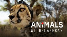 Animals with Cameras (2018) Documentary Series In this groundbreaking new series wildlife cameraman Gordon Buchanan joins forces with scientists to put cameras on animals. Together, they make extraordinary discoveries about the lives of some of the planet's most fascinating species.