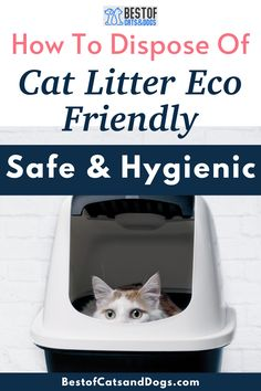 How To Dispose Of Cat Litter Eco-Friendly? The easiest and most common method to dispose of cat waste is to scoop it out of the box, seal it in a bag, and toss it in the garbage. But biodegradable bag designed for cat litter is...Read more here! #ecocatlitter #catlitter #cats Cat Health Care, Cat Care Tips, Healthy Pets, Happy Animals, Biodegradable Products, Cats And Kittens, Cute Cats, Sustainability, Cat Lovers