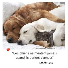 Amour chien et chat pour toujours Les chiens ne mentent jamais quand ils parlent d'amour. -J.M.Masson …. Jeffrey Moussaieff Masson est un essayiste américain. Date et lieu de naissance: 28 mars 1941 (76 ans), Chicago, Illinois, États-Unis Enseignement: Université Harvard  Vidéo chien et chat qui dorme ensemble toujours