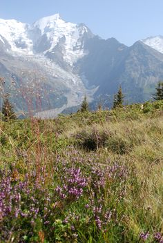Alpine Meadow in Summer, View over les Houches, Chamonix, Grand Massif