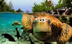 Dit moet je zien: prachtige fotoserie van dieren onder water