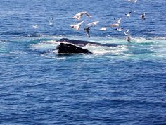 Whale Watching in Mass