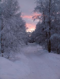 A winter trail tinged with pink from the setting sun!