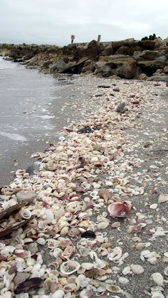 Popular Beaches In Florida. Places To Stay In Florida. The Beaches of Florida are worldwide known as one of the best vacation destinations in the entire world and are with that, the most incredible holiday-trip travel spots for every Beach Lover. Florida Vacation, Florida Travel, Vacation Places, Florida Beaches, Vacation Spots, Places To Travel, Places To See, Sanibel Florida, Greece Vacation