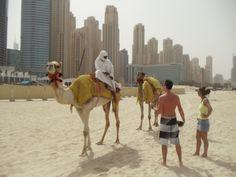 Camellos en la playa.