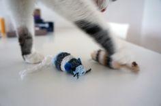Cotier testet Katzenspielzeug