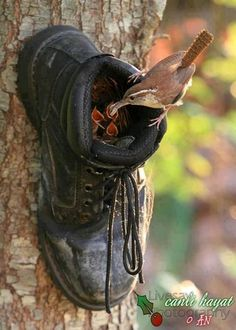 DEVELOP YOUR INTERESTS - GARDENING! ♥.Attach a boot to a tree