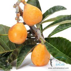 Loquat fruit. Nispero  Fruta De Puerto Rico | Escrito por Dra. Mariona Gummà Bertran el Viernes, 24 Mayo 2013 ...
