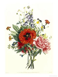 Bouquet of Foxglove, Poppy and Peonie Giclee Print by Jean Louis Prevost - AllPosters.co.uk