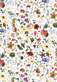 """Floral Eve"", Liberty of London printed cotton lawn. The design is taken from the botanical painting 'The Herbarium Specimen', by Rachel Pedder-Smith, which is over five meters long and took 766 days to complete. The most floral elements of the painting were chosen for the fabric design."