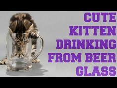 Cute Kitten Drinking From Beer Glass │ Funny Video │ 2015 - YouTube #cute #kitty #cat #kitten