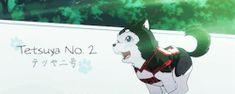 dog mg kuroko no basuke kuroko no basket Kuroko Tetsuya kuroko KuroBasu kurobas nigou knb tetsuya number two knbm