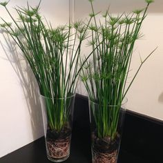 Plantes en pot d'intérieur : tentez l'originalité avec Fleurodet