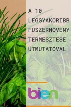 Kertészkedés- kattints a linkre és olvasd el a teljes cikket