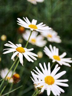 #nikond7100 #flowers #nature