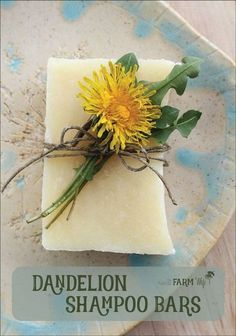 Dandelion Shampoo Bars Recipe - this sunny palm-free soap recipe is infused with dandelion flowers and scented with a cheerful blend of citrus essential oils. Directions are given for both hot process and cold process methods.