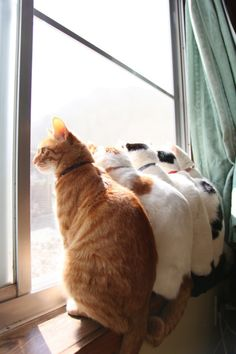 Katzen am Fenster