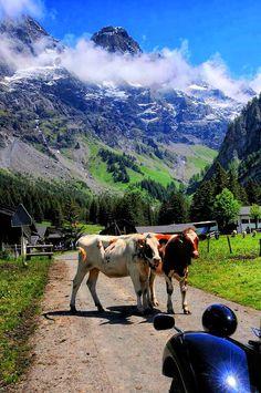 Solalex, Switzerland - Pixdaus  Mable and Murphy out for a stroll. #villars #solalex www.villars.ch Merveilleuse Solalex...