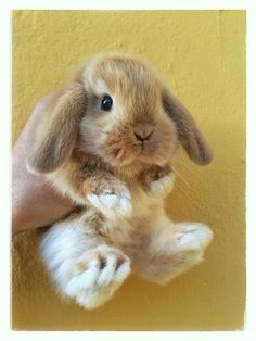 Little baby bunny! Ooh I could just eat you up Perhaps NOT the right turn of phrase, but you know what I mean