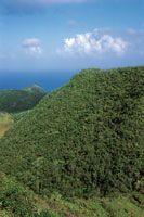 La composición y el aspecto particular de los bosques de la isla de Providencia son el resultado de su aislamiento geográfico y la constancia de los vientos.