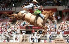 images of rodeo broncs - Bing Images