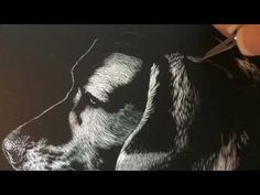 Scratchboard etching of a dog using a number exacto blade on an 8 x 10 Ampersand Scratchbord. The reference image was provided by Robyn Tremaine Pollock. Black Canvas Paintings, Scratchboard Art, Reference Images, Great Videos, Beagle, Dogs, Youtube, Black Backgrounds, Drawings Of Dogs