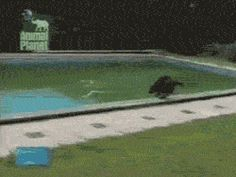 This Is A Really Clever Dog (awesome gif)