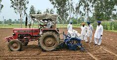 Punjab Fields