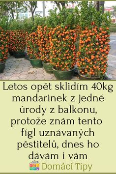 Fruit Trees, Evergreen, Gardening, Plants, Balcony, Lawn And Garden, Plant, Planets, Horticulture